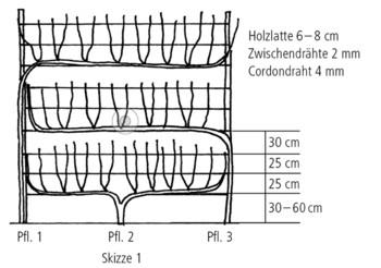 reben h berli fruchtpflanzen ag neukirch egnach. Black Bedroom Furniture Sets. Home Design Ideas