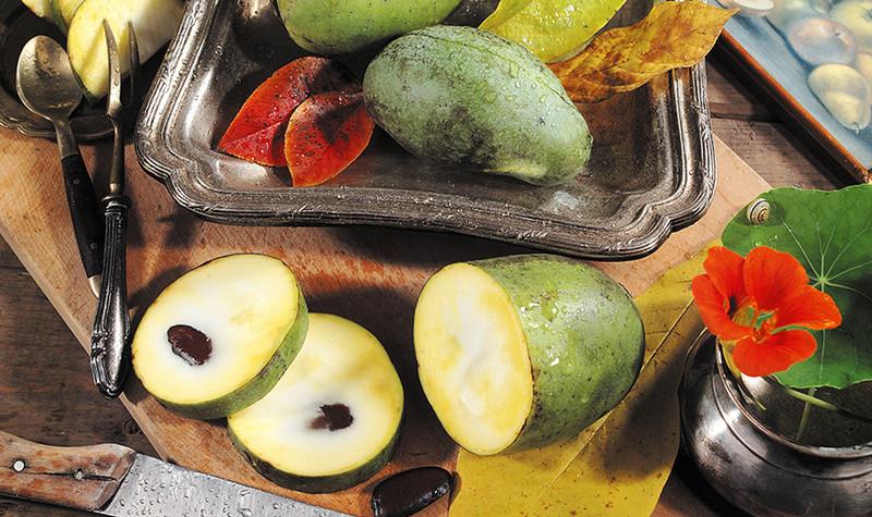 indianer banane eine exotische frucht auf erfolgskurs h berli fruchtpflanzen ag neukirch egnach. Black Bedroom Furniture Sets. Home Design Ideas
