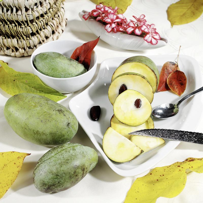 indianer banane prima s h berli fruchtpflanzen ag. Black Bedroom Furniture Sets. Home Design Ideas