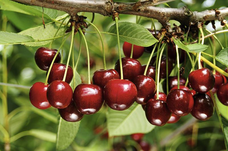 Beliebt Bevorzugt Säulenobst - Häberli Fruchtpflanzen AG, Neukirch-Egnach @MZ_44